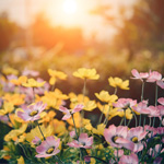 Maak je tuin klaar voor de lente met deze tips