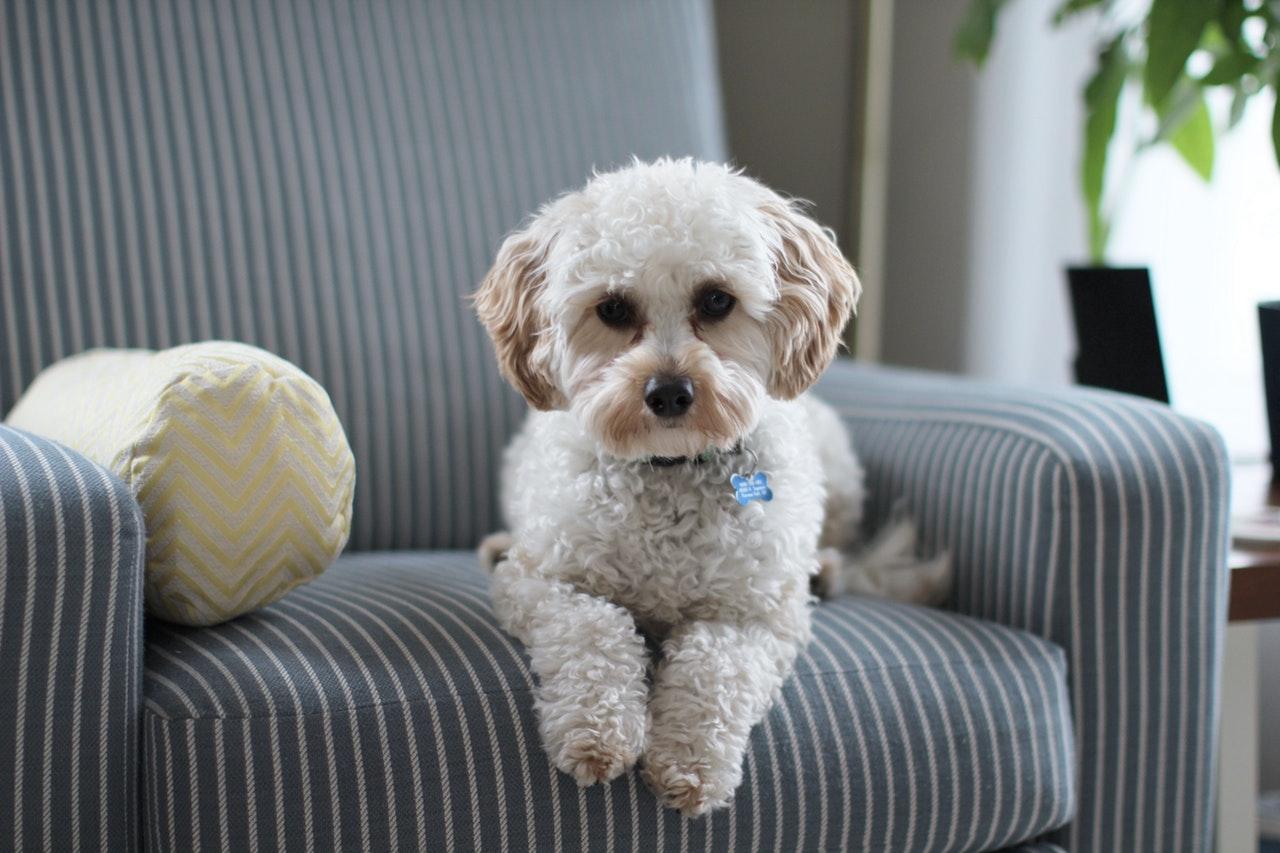 Hond op stoel
