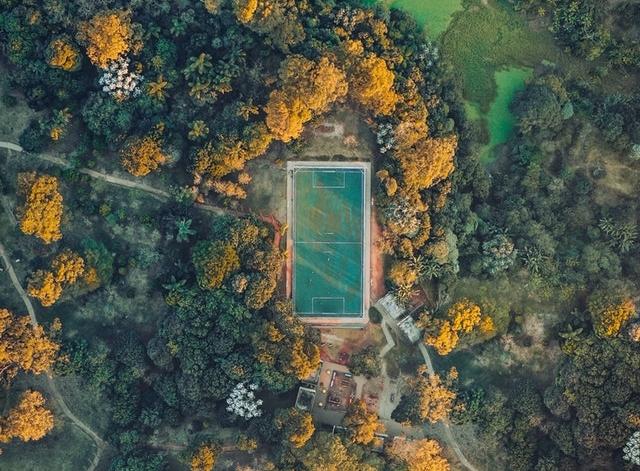 Sportveld in bos