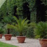 Koop een tropische palmbomen mix voor buiten bij 1DayFly met 58% korting