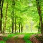 TravelBird geeft nu 45% korting op een weekendje weg in de Ardennen in de prachtige vallei van de Semois