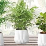 Pak 55% korting op een set trendy kamerplanten bij Outspot
