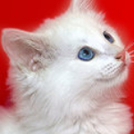 Met deze Zooplus kortingscode krijg je 10% korting op kattengrit