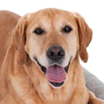 Zooplus kortingscode: je krijgt 12% korting op verzorgingsproducten voor jouw huisdier