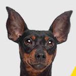 VidaXL kortingscode: 10% korting op alle hondenproducten